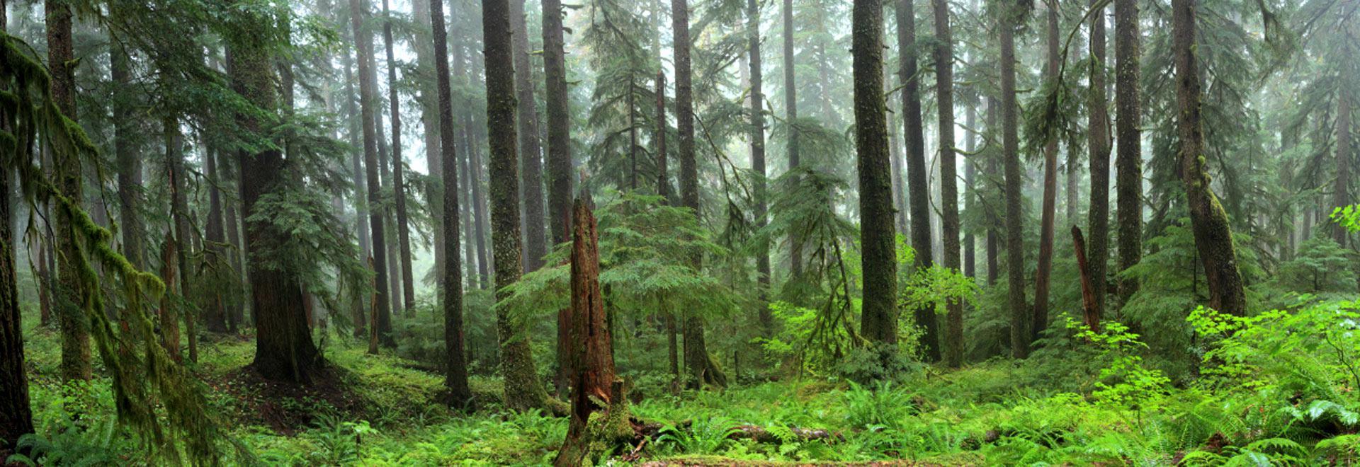 Przyroda widok lasu - element slidera